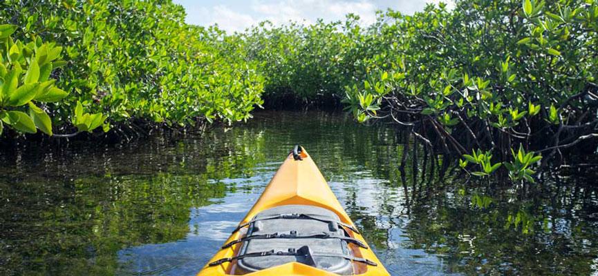 Mangrove Canoe Adventure